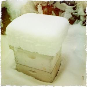 winterhive